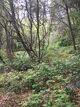 Reclaiming trails